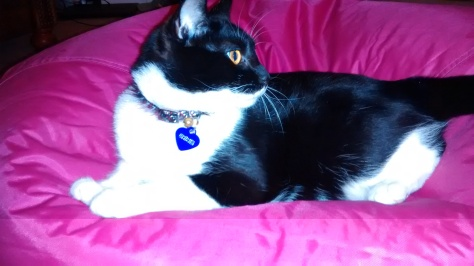 Toker my cat, Carolyn M. Bowen Author