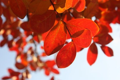 Embracing the New Season, The Writing Life, Carolyn Bowen Author