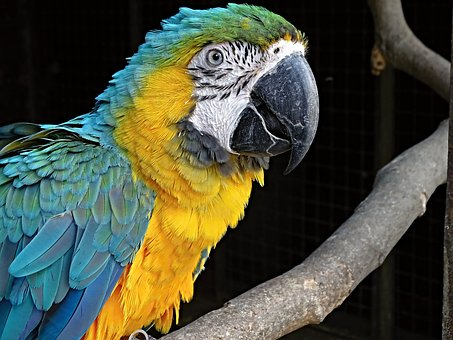 The Lost Macaw, B.L. Blair, Writing Life, Book Blog Tour, CMBowen Author, Book Blogger