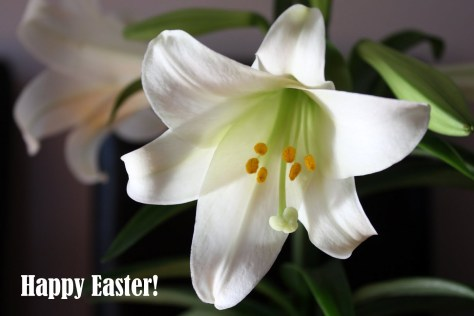 Easter Lily, Happy Easter