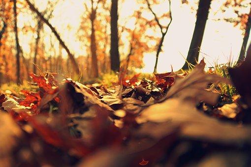 Hello November, Carolyn M. Bowen Author
